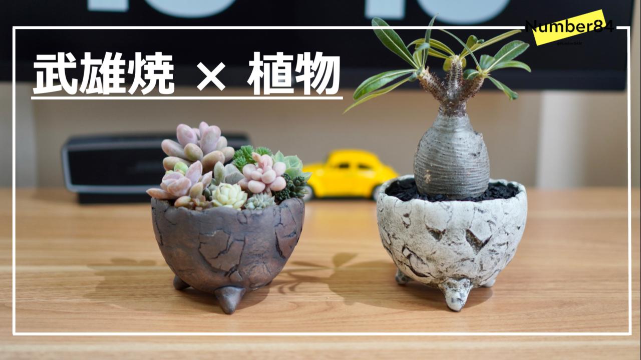 武雄焼と植物