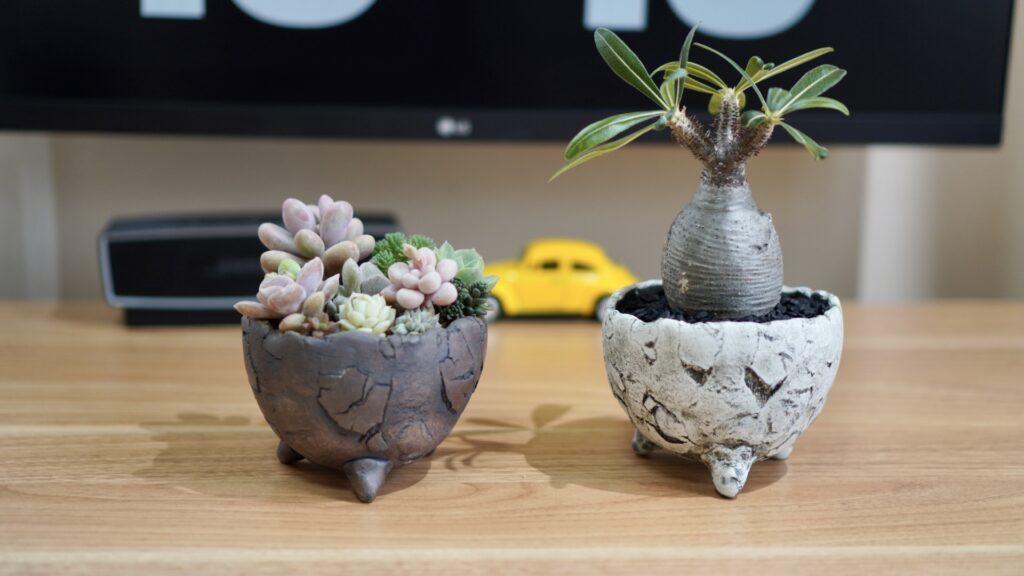 武雄焼-鉢