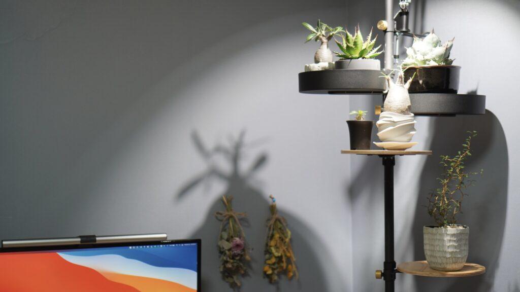 壁紙-植物が映える